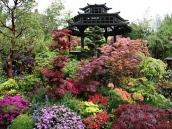 poze imagini gradini cu flori primavara vara toamna 2