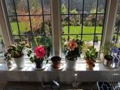 poze imagini gradini cu flori primavara vara toamna 18
