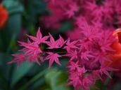 poze imagini gradini cu flori primavara vara toamna 20