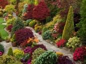 poze imagini gradini cu flori primavara vara toamna 22