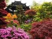 poze imagini gradini cu flori primavara vara toamna 23