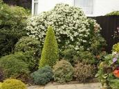poze imagini gradini cu flori primavara vara toamna 27