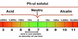 Identificarea tipului de sol – Testul de aciditate sau Ph-ul