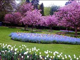 gradini cu flori splendide