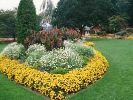 amenajare gradina cu flori