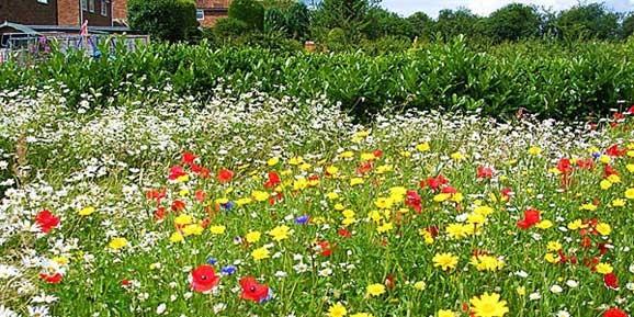 poza foto gazon cu flori