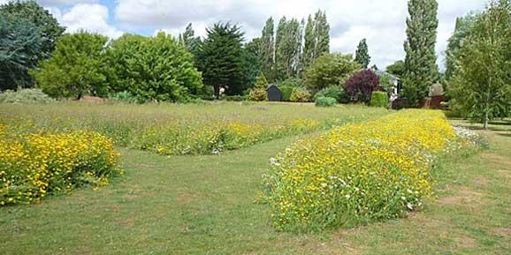 poza imagine gazon cu flori