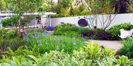 Amenajare gradina cu ferigi si ierburi decorative
