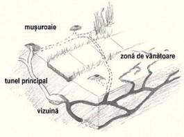 sectiune tuneluri cartite combatere cartite capcane cartia