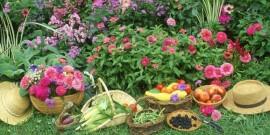 10 sfaturi pentru o gadina frumoasa