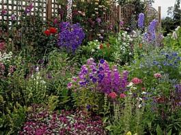 foto poze cu flori anuale si bianuale in gradina