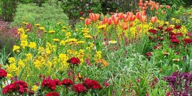 Gradini cu flori – sfaturi pentru o gradina splendida