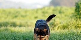 Probleme ale gazonului cauzate de animalele de casa