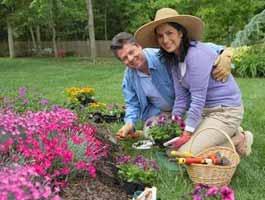 cuplu plantand flori in gradina