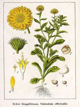 desen cu flori galbene de gradina