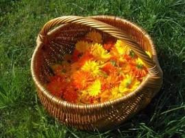 cos de rachita plin cu flori de galbenele pe iarba gazon