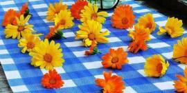 Galbenelele – florile pe care Fecioara Maria si le impletea in par