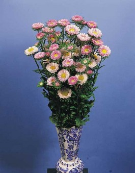 imagine cu vaza cu flori taiate de gradina ochiul boului