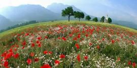 Peisaje de Primavara – 100 de imagini spectaculoase