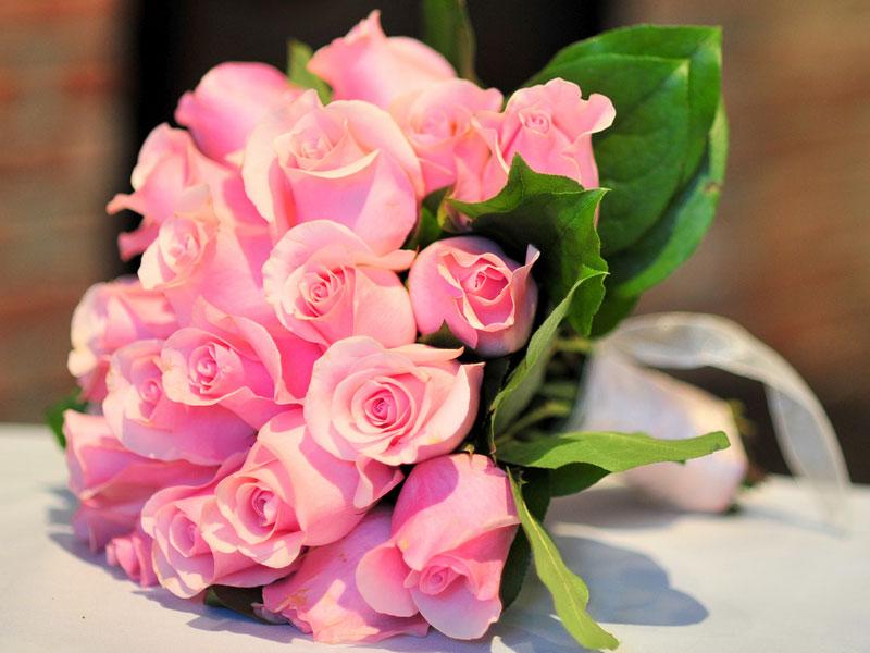 Фото на рабочий стол цветы на весь экран