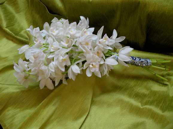 orhidee albe flori poze