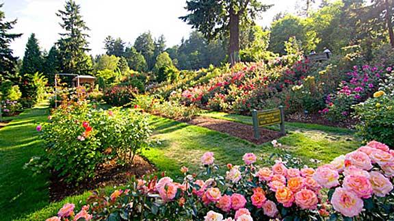 Grupuri de trandafiri