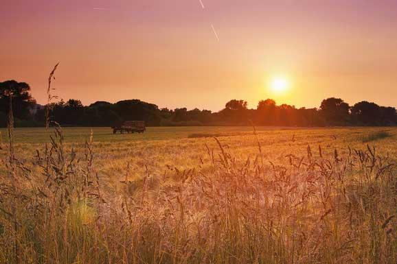 peisaje de vara apus de soare pe un camp cu grau