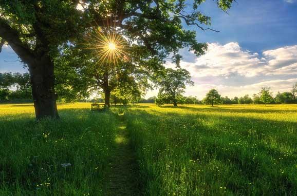 peisaje de vara camp verde soare luceste printre frunze