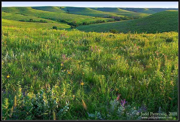 Dealuri pline cu flori de vara