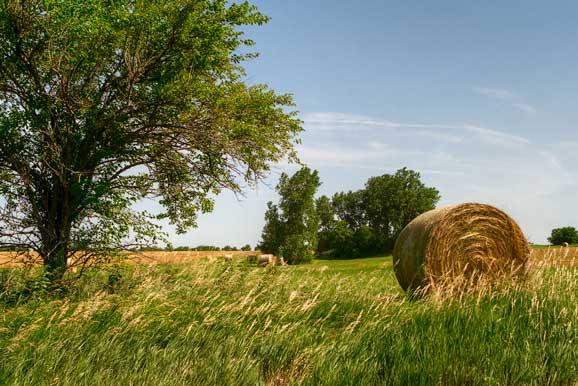 Peisaj de vara agricol