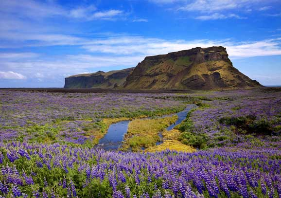 camp cu Flori salbatice de vara