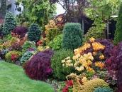 poze imagini gradini cu flori primavara vara toamna 6