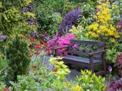 poze imagini gradini cu flori primavara vara toamna 7