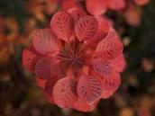 poze imagini gradini cu flori primavara vara toamna 17