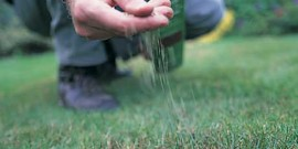 infiintare peluza gazon cu ajutor seminte