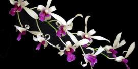 imagine cu floare orhidee